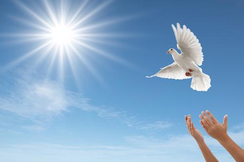 O Amigo Espírito Santo